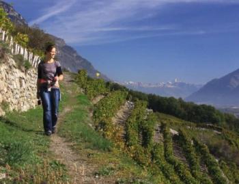 Wijnwandelen in Wallis special bij Bergen Magazine