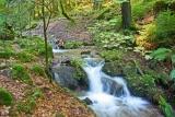 Thüringer Wald. Foto franksw80