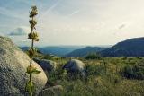 De heuvels van Lozère