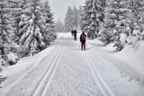 Langlaufen in Tsjechië. Foto (c)SzymonNitka