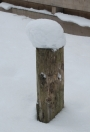 Sneeuw. Foto fra.ps
