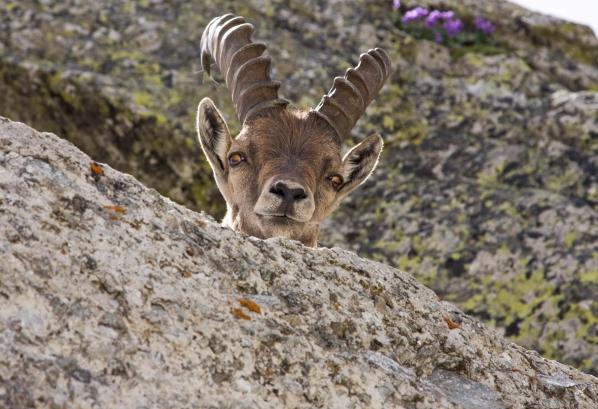 Citaten Over Bergen : Over de winnende foto s quot een scherpe snoet en schapen als