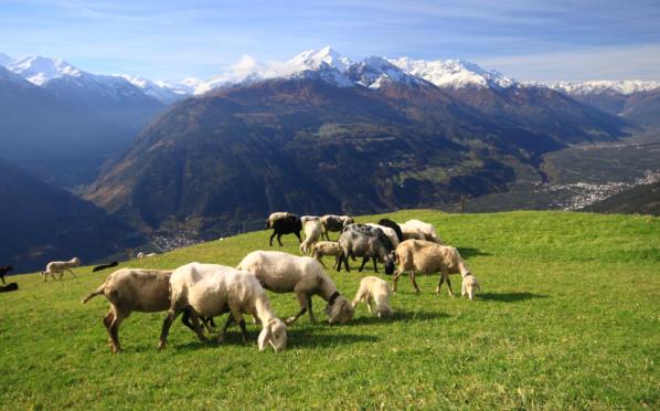Wandelen in Zuid-Tirol. Foto Jonathan Vandevoorde