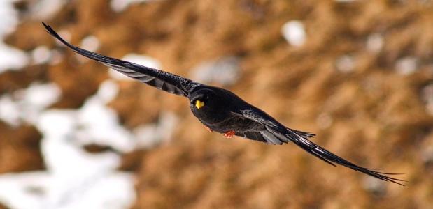 Fotowedstr vogels