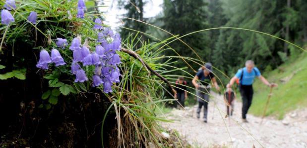 Wandelen op de Alpe Adria Trail. Foto Tom van der Leij