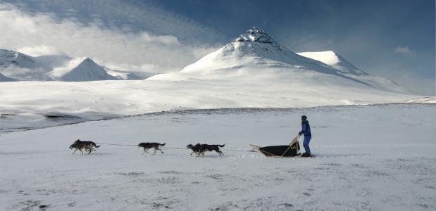 Achter de honden op een slee in de Arctische wildernis van Zweden