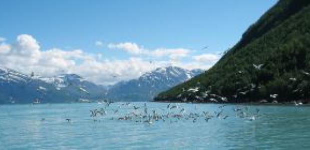 Fjord Noorwegeh. Foto: Jtropetter