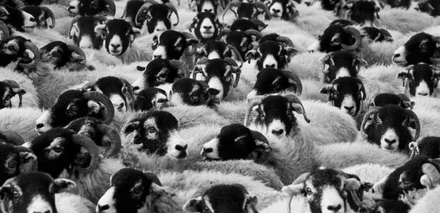 herders in Berner Oberland