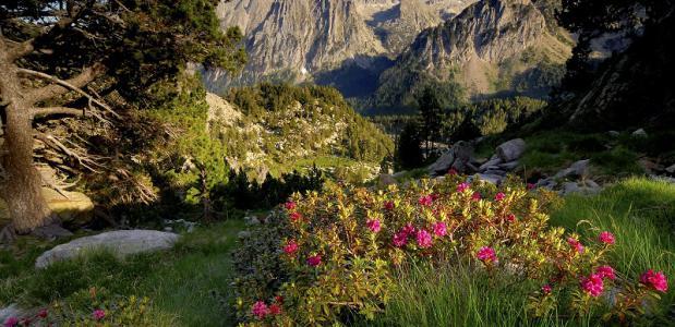 De bergen van catalonie,