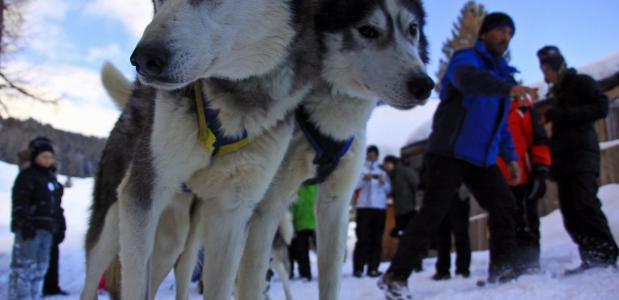 Hondenslee rijden met de niet-skipas. Foto Jonathan Vandevoorde