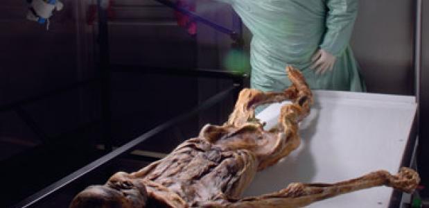 Een onderzoeker onderzoekt de overblijfselen van ijsmummie Ötzi