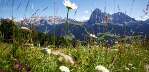 Bergen en groen in Val Gardena