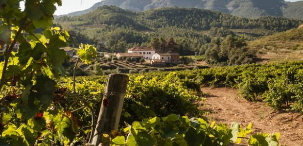 De mooiste wijnvakantie in Catalonië
