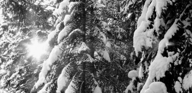 Wat leeft er in een winterbos? Foto Simone van Velzen