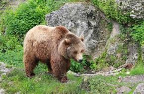Een beer in de dierentuin in Oostenrijk.