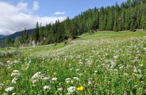 Graubünden. Foto: Hansueli Krapf via Wikimedia commons