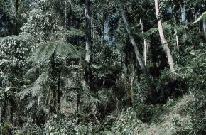 bergen papua nieuw guinea