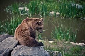 Bruine beer in een Duits wildpark
