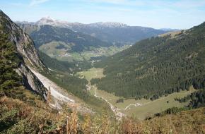 Wildental