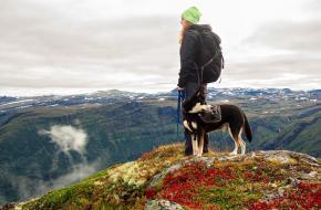 Met je hond in de bergen