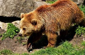 Beren in Zwitserland