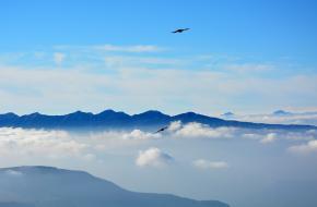 Vogels in de bergen