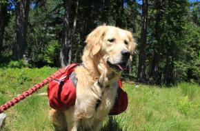 hond mee bergwandeling