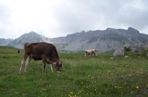 Alta via Bepi Zac: foto M Vermeulen