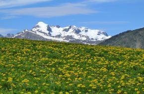 Lente in de alpen