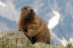Marmot_foto Leo-setä