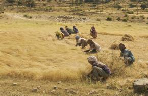 Grasland in Ethiopië ©A.Davey