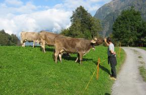 Helpen op een bergboerderij