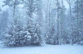 Te weinig sneeuw ©Ruthanne Reid