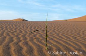 Marokko. Foto Sabine Joosten