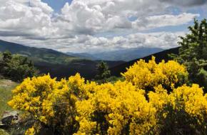 gele brem in glooiend landschap