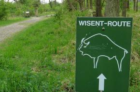 Wisent-route in Zuid-Kennemerland ©David van der Mark