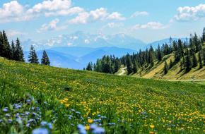 Dit zijn de meest bijzondere bloemen in de bergen
